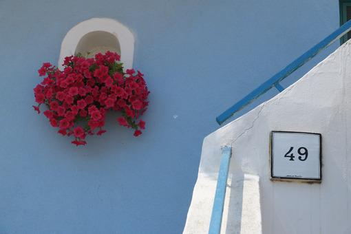Vaso fiori. Foto Procida. Vase of red flowers on Mediterranean house facade. - MyVideoimage.com | Foto stock & Video footage