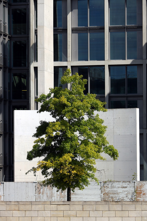 Vegetation and modern architecture. Bundestag offices - MyVideoimage.com