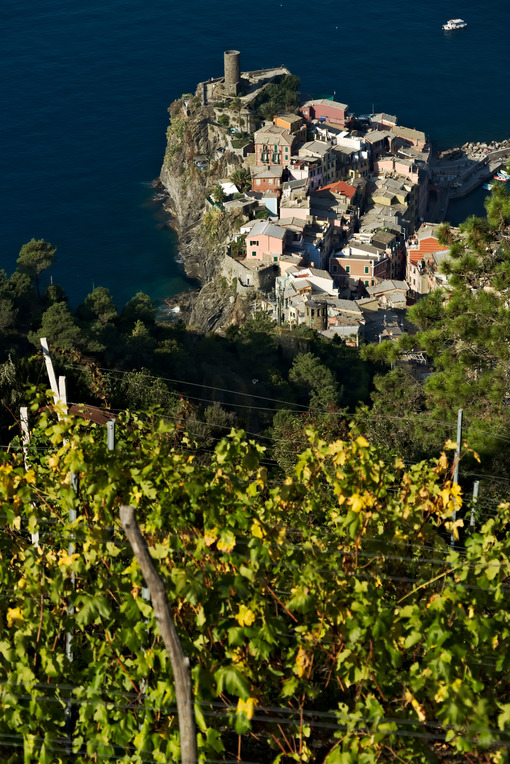 Vernazza, a village and vineyard in the Cinque Terre. Panorama of the village of Vernazza and of the vineyards of the Shiacchetrà vineyard in Liguria. - LEphotoart.com