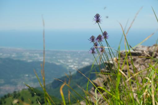 Versilia panorama. Versilia panorama with mountain flower. Stock photos. - MyVideoimage.com | Foto stock & Video footage