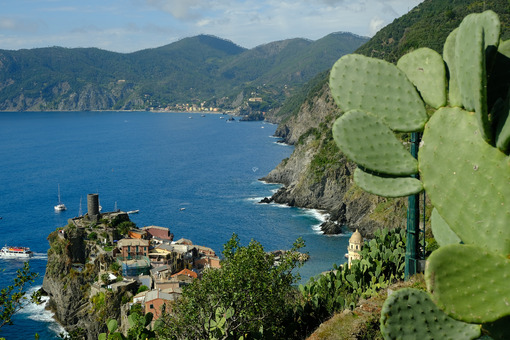 Village of Vernazza in the Cinque Terre with the sea bay and the mountains. Top view with prickly pear cactus plant. - MyVideimage.com