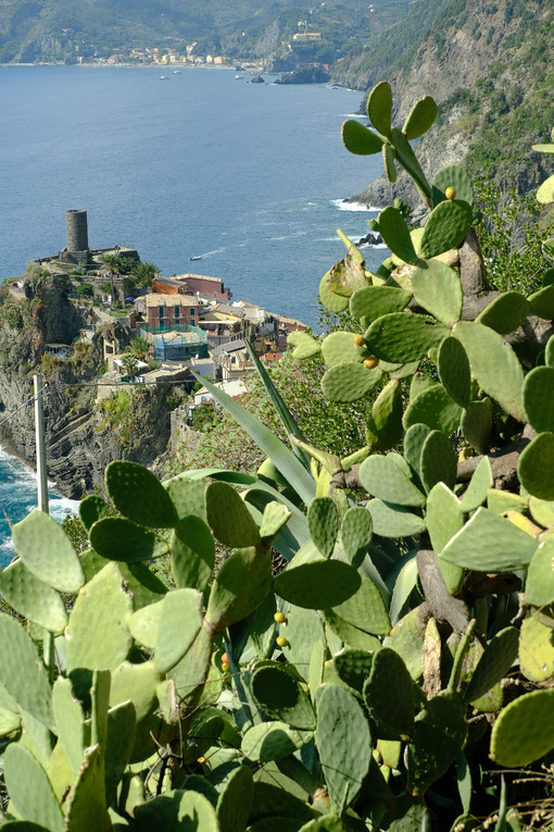 Village of Vernazza in the Cinque Terre with the sea bay and the mountains. Top view with prickly pear cactus plant. - LEphotoart.com