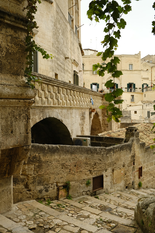 Vine shoot with leaves in a street of the ancient city of Matera. - MyVideoimage.com