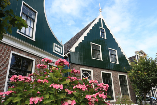Wooden house. Wooden and brick house in northern Europe. In the foreground garden with hydrangea with pink flowers. - MyVideoimage.com | Foto stock & Video footage