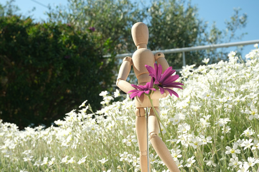Wooden mannequin carries flowers of red daisies and white cerastium. Mediterranean garden in bloom on the Ligurian coast. - MyVideoimage.com