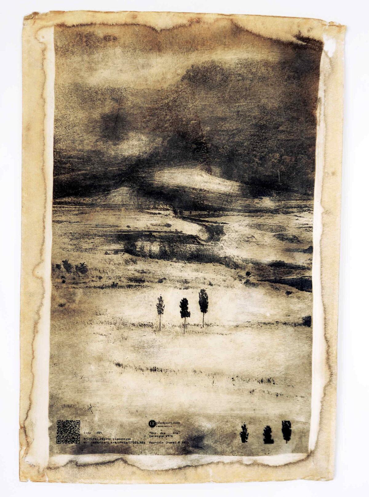 Foto paesaggio di Sardegna. Tre alberelli sopravvivono nell'arsura del paesaggio.